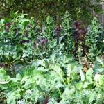 farm-march-13-0732
